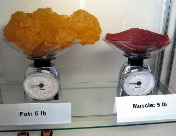 ignore the scale